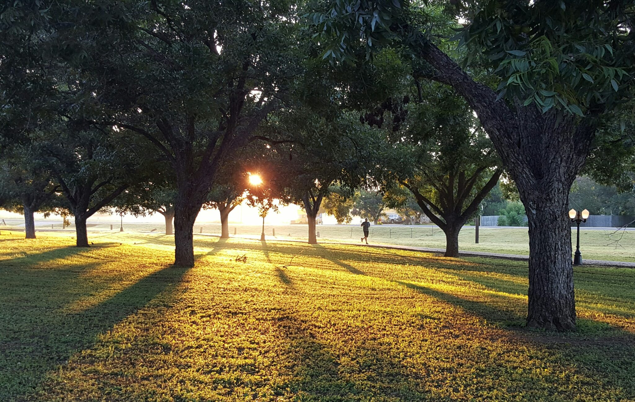 Laufen für Musiker*innen, Läufer im Park, Sonnenuntergang